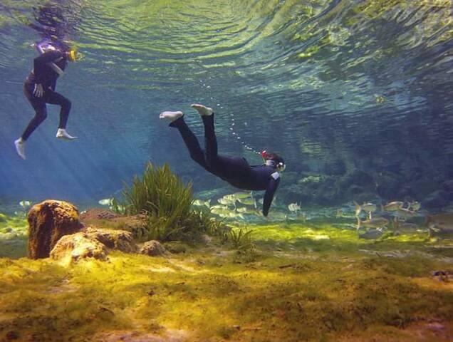 Ozello Bungalow/Fishing/scallops/lots of nature!