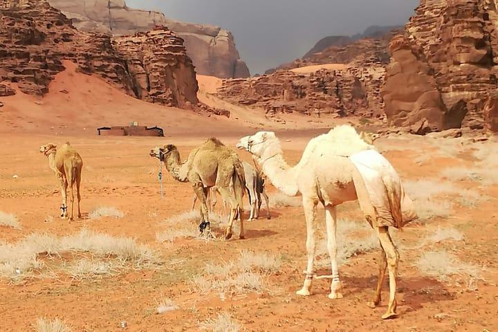 Authentic Bedouin experience 2