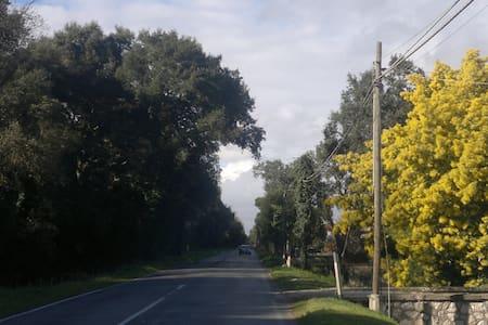 immersa nel verde del parco - Sabaudia