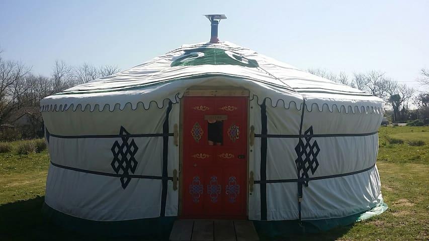 Wych Elm Yurt (Alder white yurt) - Cornwall - Yurta