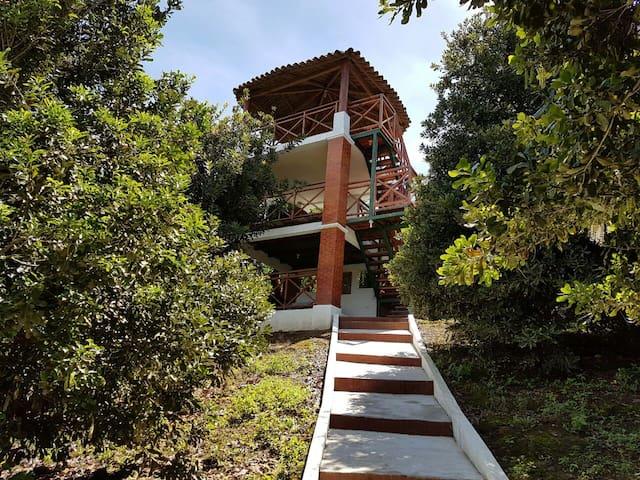 Macadamian Forest - El Tejar