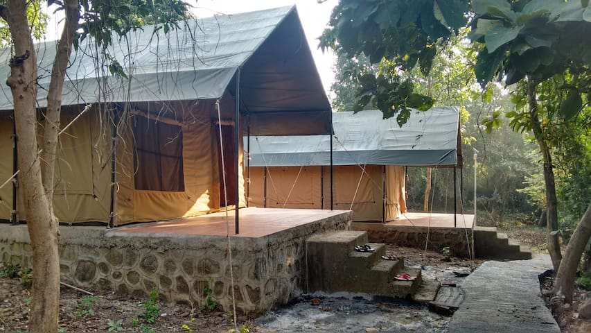 Jungle Safari Tents!! An amazing experience!!