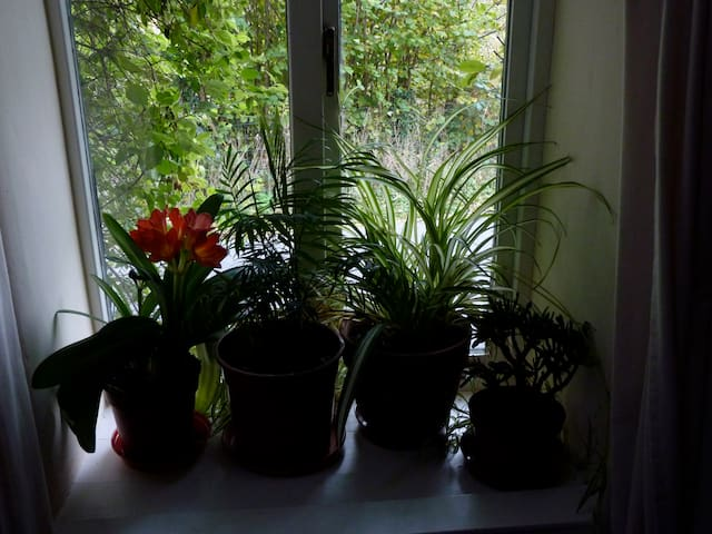 House plants in every window