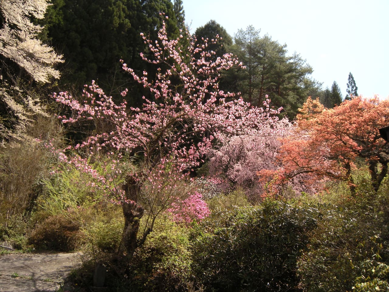 民宿松尾の庭ー春