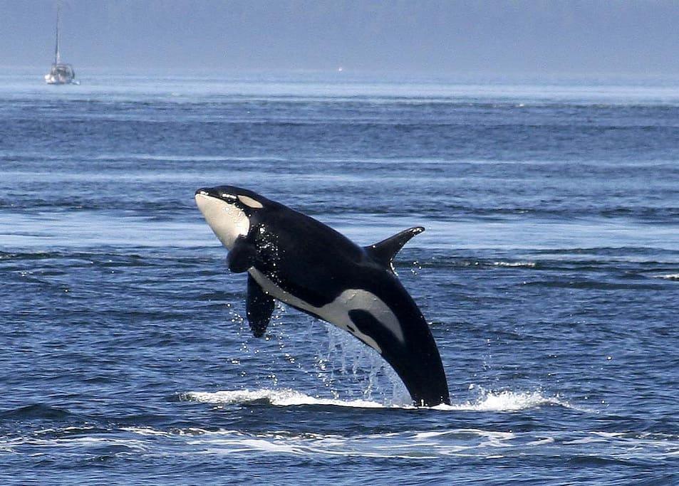Whale watching tours a short walk away