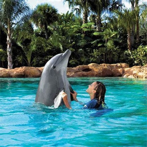 Discovery Cove Within walking distance