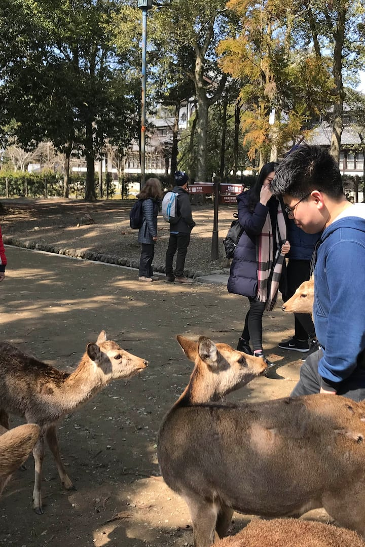 We can stop to feed those cute deer in t