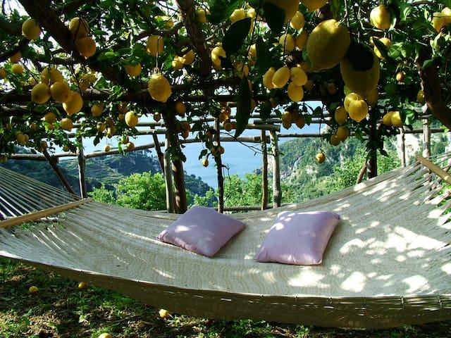 Il Limoneto (the Lemon Grove)
