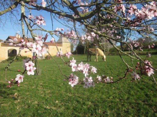 Une chambre dans le Gers au milieu des chevaux