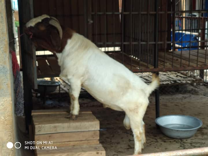 Bagaicha goat resource center