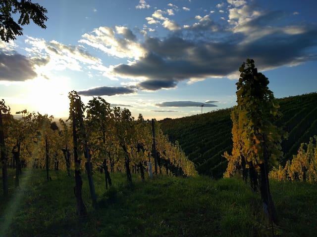 Übernachten inmitten der Weingärten