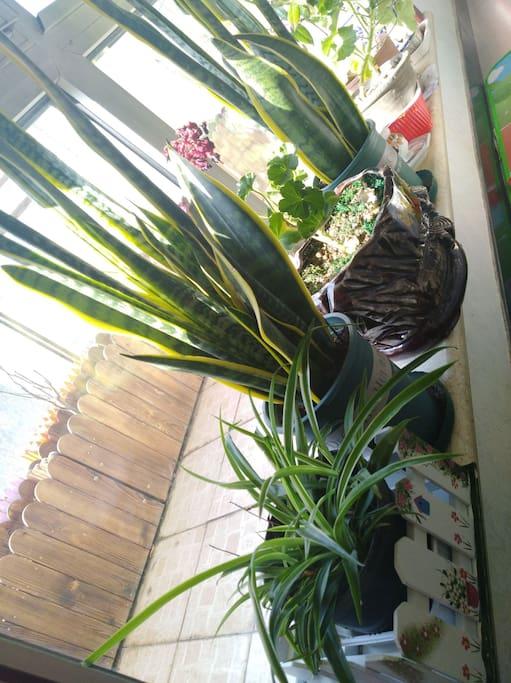 客厅阳台鲜花