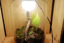 luminária viva
