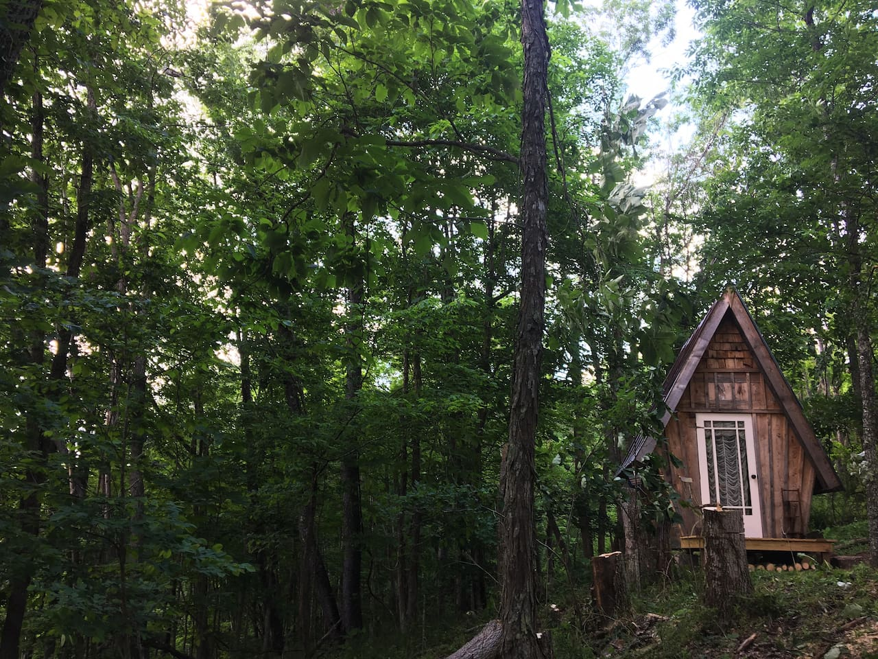 Tiny Living in the Woods