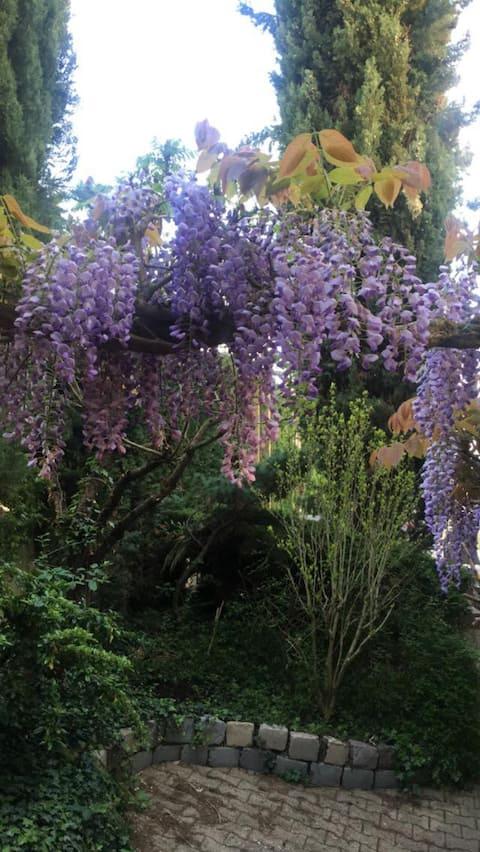 Le Jardin de Félicie, entrée indépendante, A6, A46