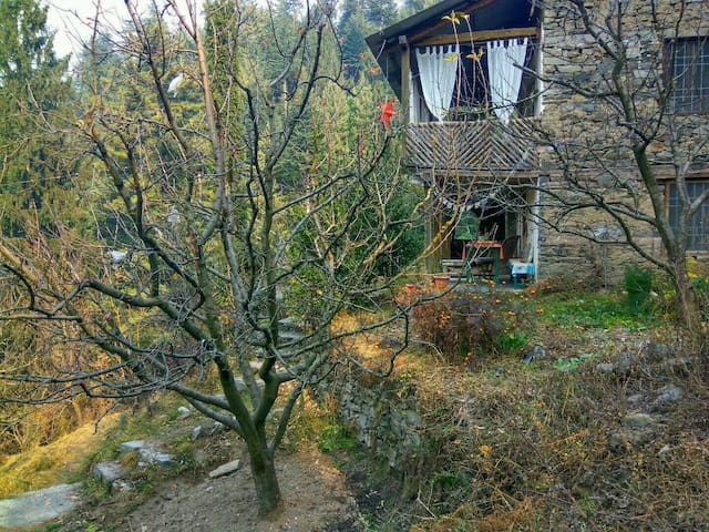 Looking at house from the orchard