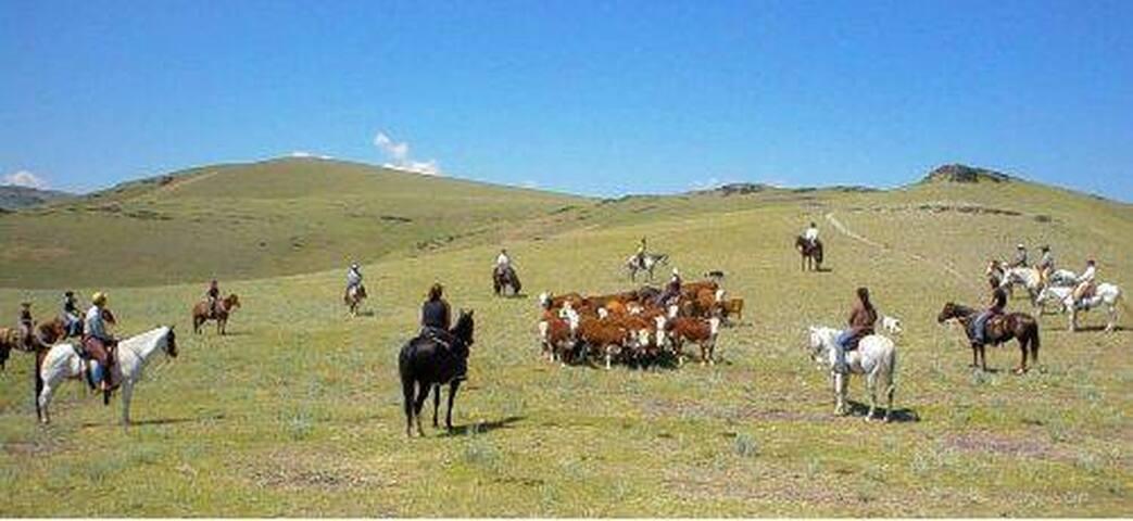 PermaCulture & Horsemanship  at  Ferme de Rachac.