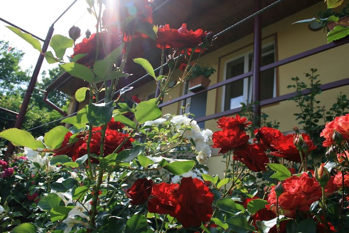 Casa Serban - Rășinari