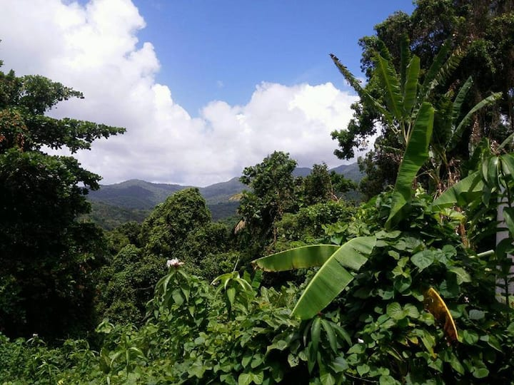 El Yunque Rainforest, papaya room