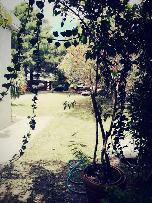 patio 2da foto