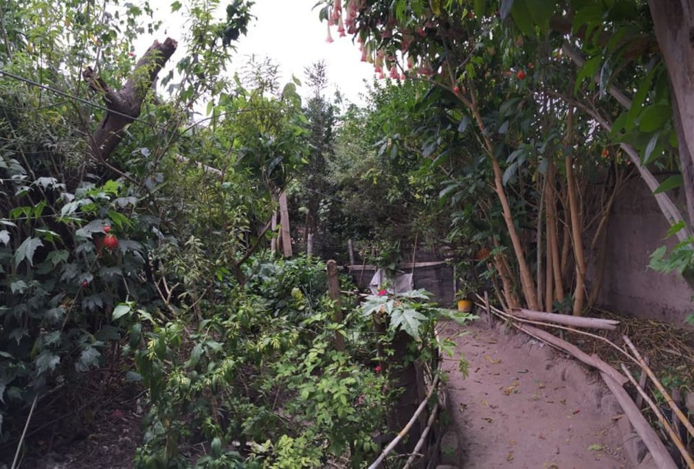 Jardín Botánico, Medicinal.  Medicinal Plants Garden.