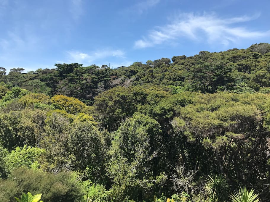 View to Makora reserve