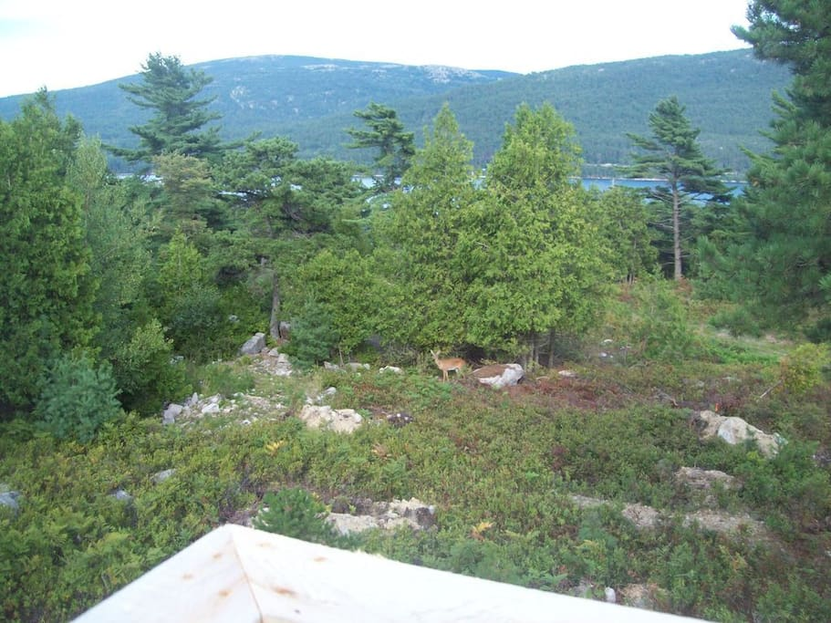 Watch Deer from Deck + View of Somes Sound, Mountains of Acadia National Park
