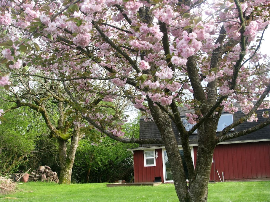 The Cottage in Springtime!