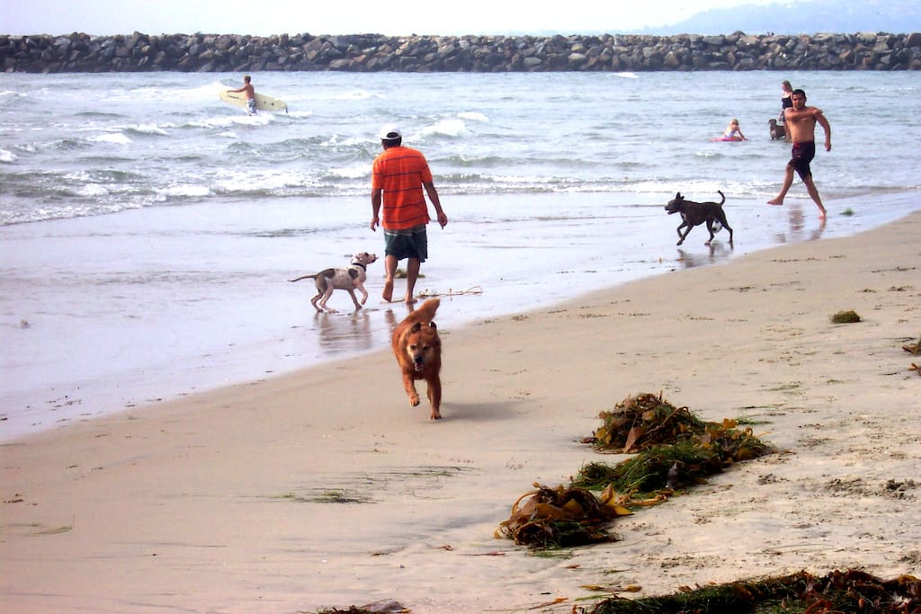 Off-Leash Dog Beach 24/7 right behind unit