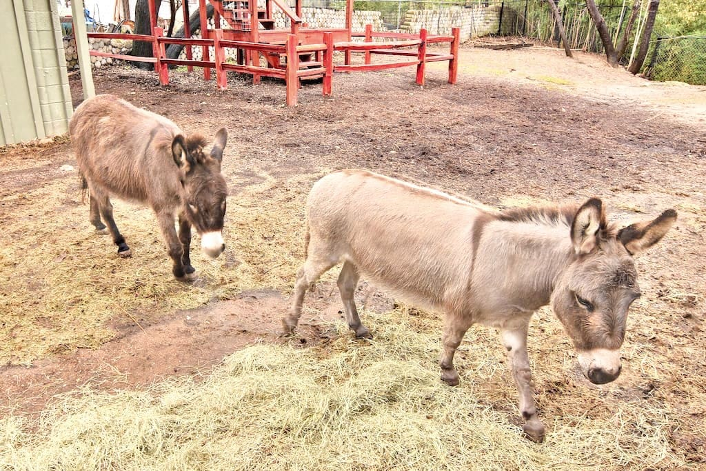 Don't miss our resident donkeys, who love attention from guests!