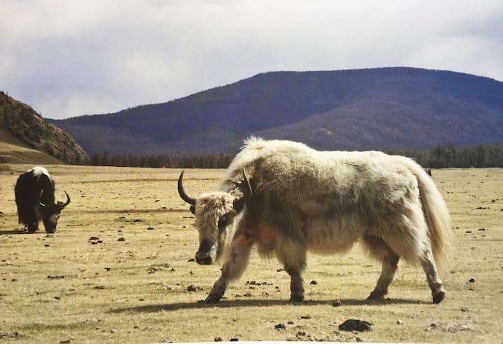 Your Destination Mongolian Nomadic Lifestyle