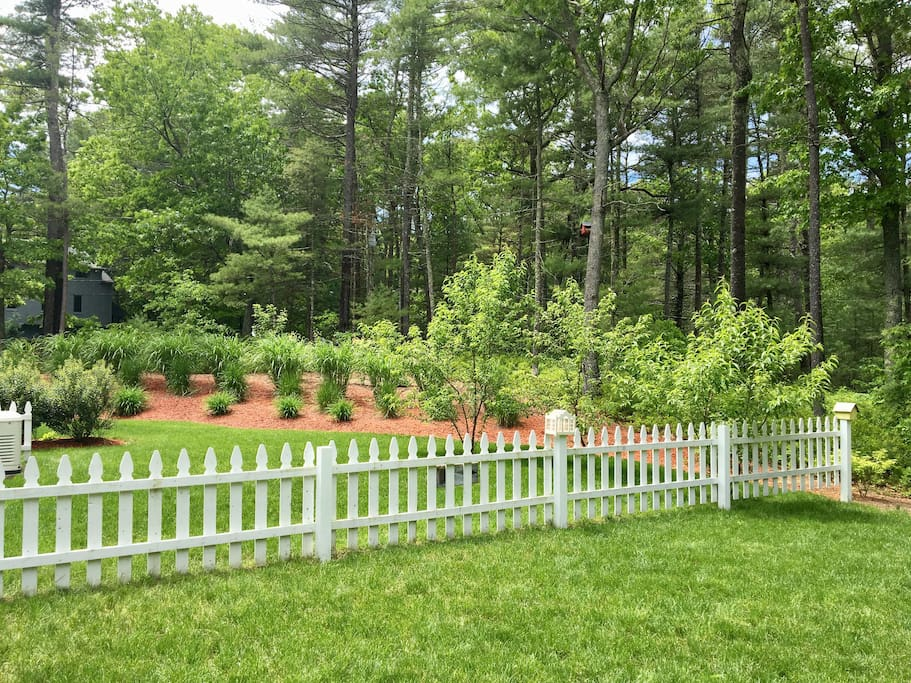 Rear View of Side Yard (Peach Trees)