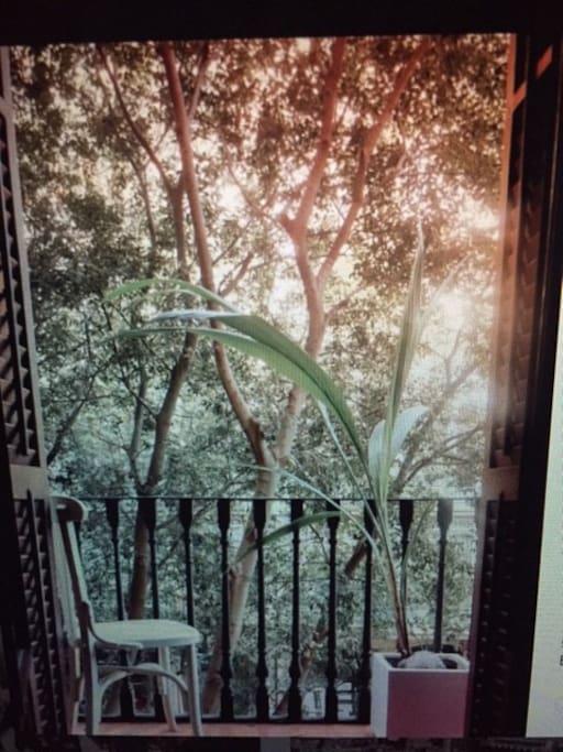 Balcony and coconut plant
