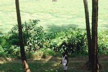 Balcony view of man walking goat with water buffalo in the background.