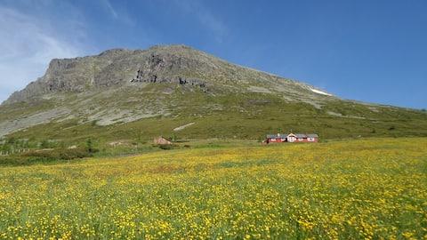 Seter ved Skogshorn. Høgestølen / Hemsedal