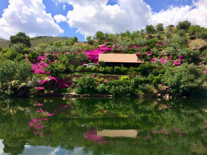 Horta da Pereira Charming House