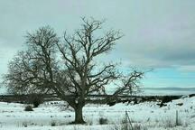 última nevada del invierno