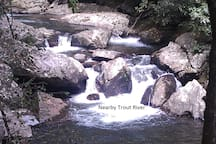 Nearby Trout Stream