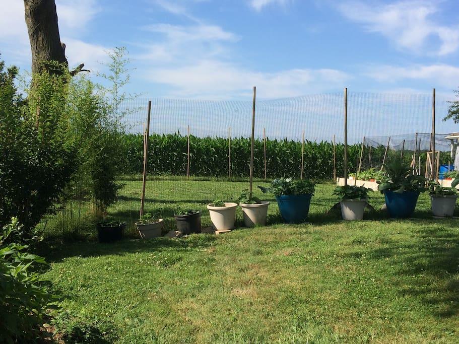 Backyard Garden-1