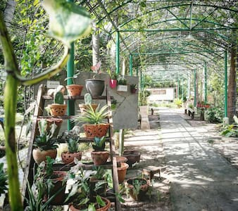 Cozy shared room with garden view - Lat Yai