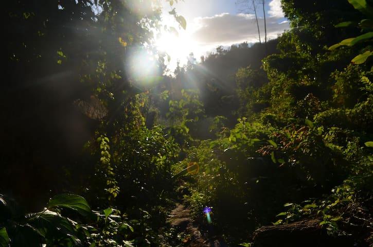 Rewild Yourself in Dominica!