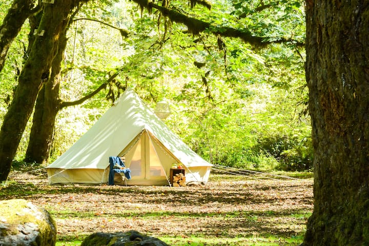 Camp In Luxury-Cincy Glamping Experience #2