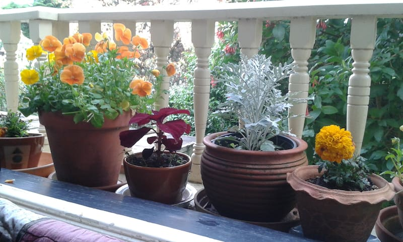 As we are plant lovers our home is filled with many plants, some common, some rare.