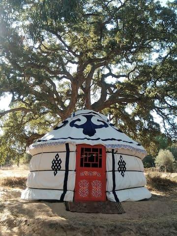 Yourte de charme s/s arbre dans une éco-communauté