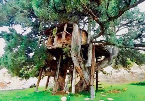 Medival treehouse in the middle of  nature.