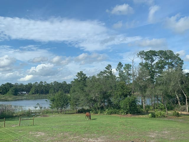RV Horse camping- adjoined to Wekiva Preserve