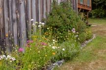 Seasonal perennial gardens have flowers, herbs & edibles. Serene park like setting will help you relax. Meyer lemons, kale, seasonal blueberries & blackberries are available for you delight.