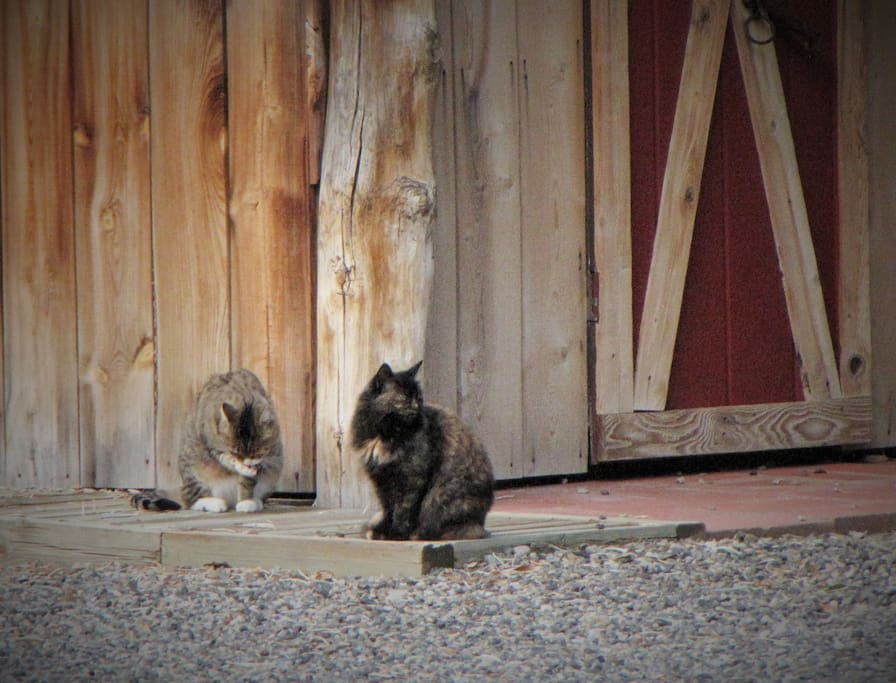 Our barn cats are very friendly!