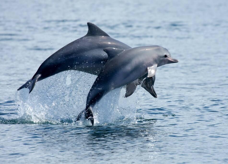 Boto Cinza  A atividade de turismo de base comunitária para observação de botos surgiu como alternativa de renda para pescadores, na tentativa de diminuir o alto índice de mortalidade destes animais.