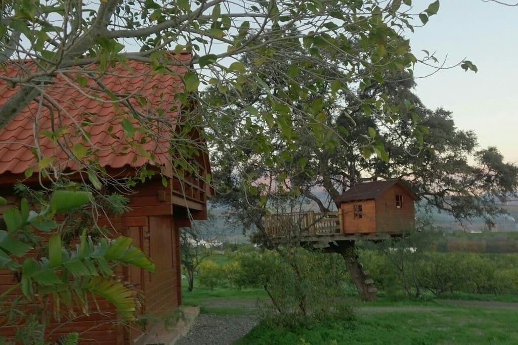 La casita del rbol caminito del rey casas en alquiler for Alquiler casa arbol